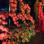 floraldisplay